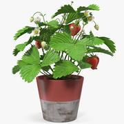 Клубника с фруктами в горшке 3d model