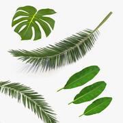 Kolekcja tropikalnych liści 3d model