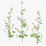 Zestaw dzikich roślin ślazowych 3d model