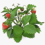 Садовая клубника с фруктами 3d model