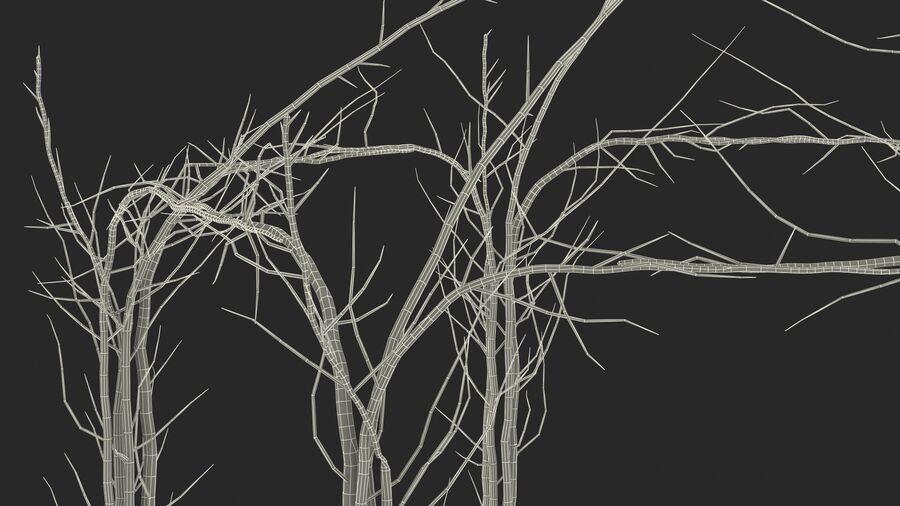 Twig  nackt