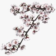 白い花と桜の枝 3d model