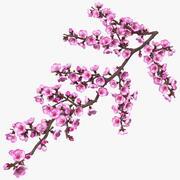 花のつぼみのある桜の枝 3d model