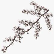 White Cherry Blossom Branch 3d model