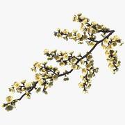 Yellow Cherry Blossom Branch 3d model