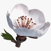 Flor Blanca Cereza modelo 3d