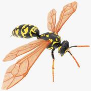 Paper Wasp 3d model