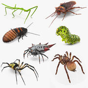 Collection d'insectes rampants rigged pour Maya 3d model
