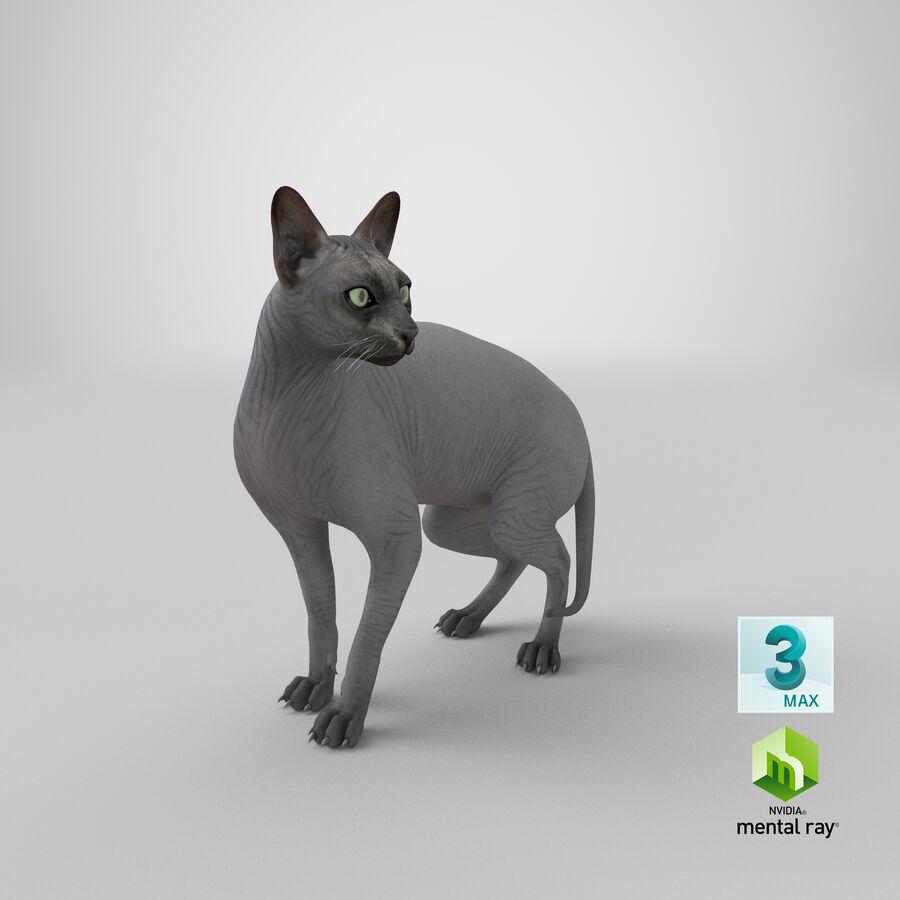 Cat coxx
