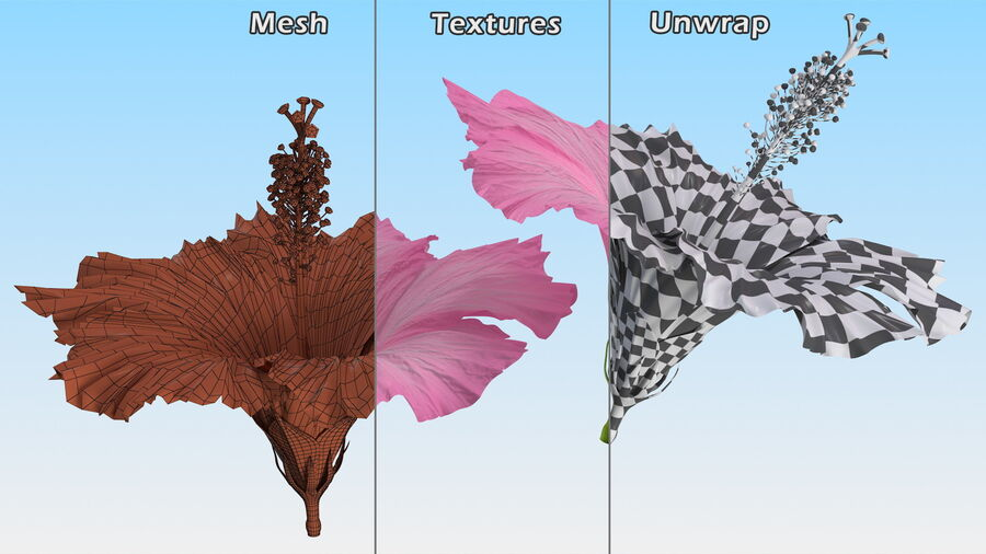 Hibiscus Flower Pink royalty-free 3d model - Preview no. 16