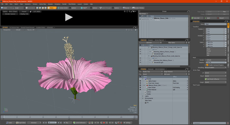 Hibiscus Flower Pink royalty-free 3d model - Preview no. 25