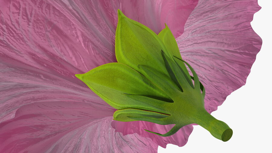 Hibiscus Flower Pink royalty-free 3d model - Preview no. 15