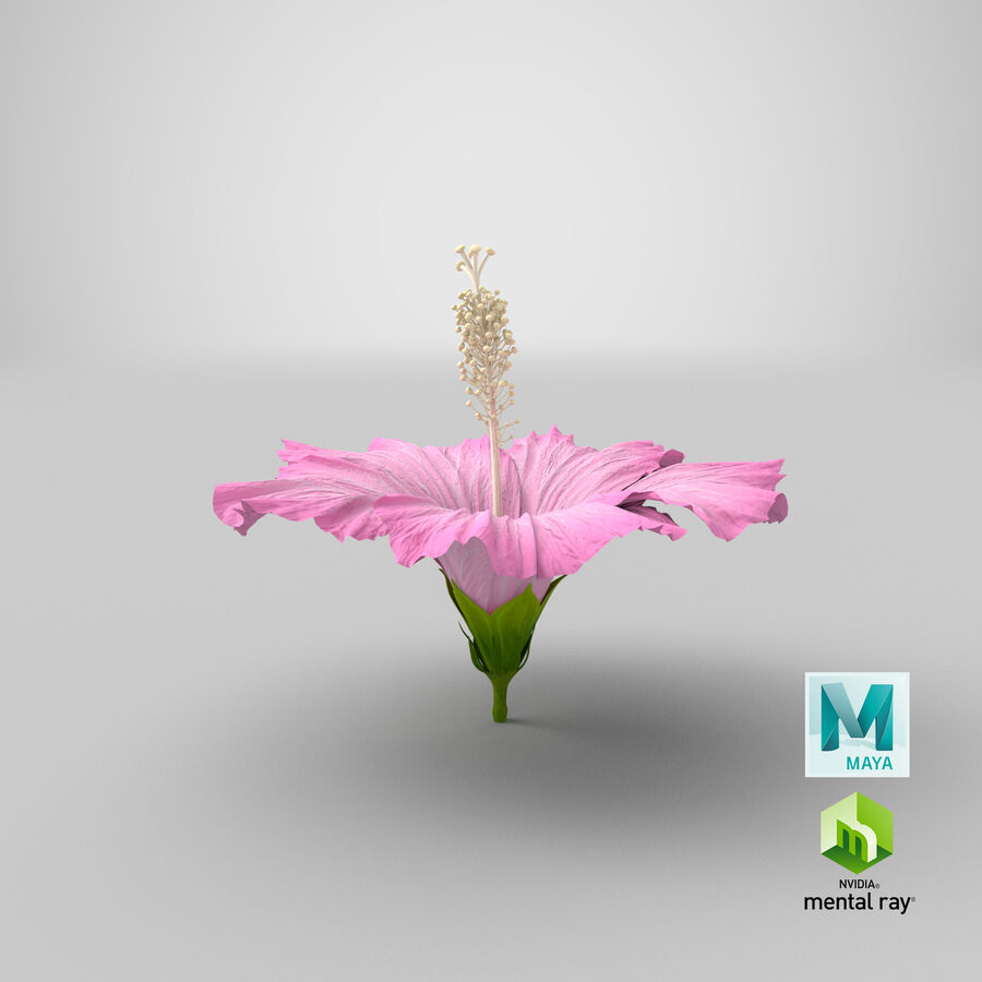 Hibiscus Flower Pink royalty-free 3d model - Preview no. 9