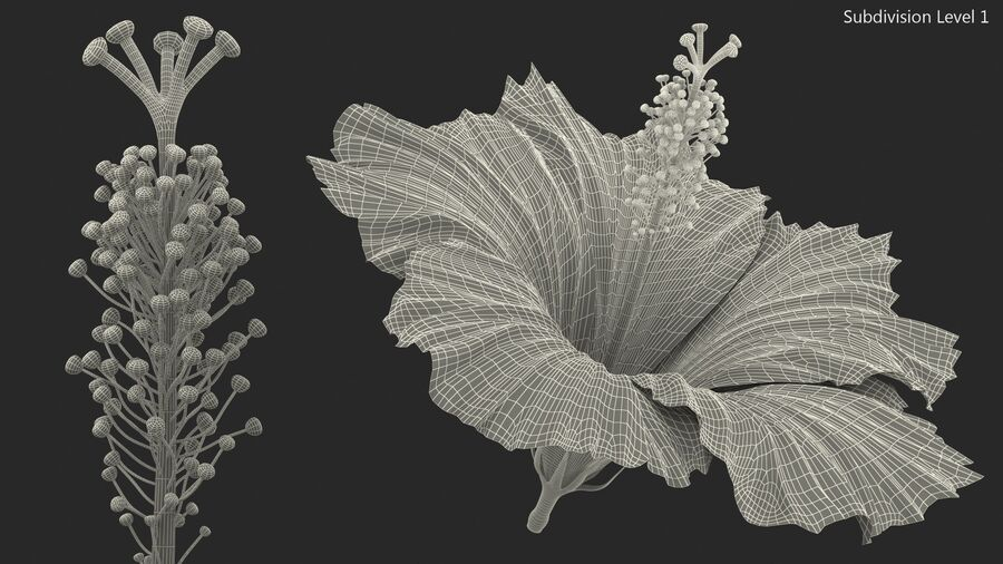 Hibiscus Flower Pink royalty-free 3d model - Preview no. 18