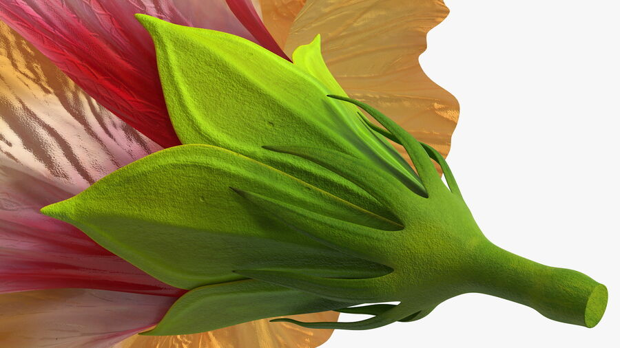 Blooming Hibiscus Flower Orange royalty-free 3d model - Preview no. 15