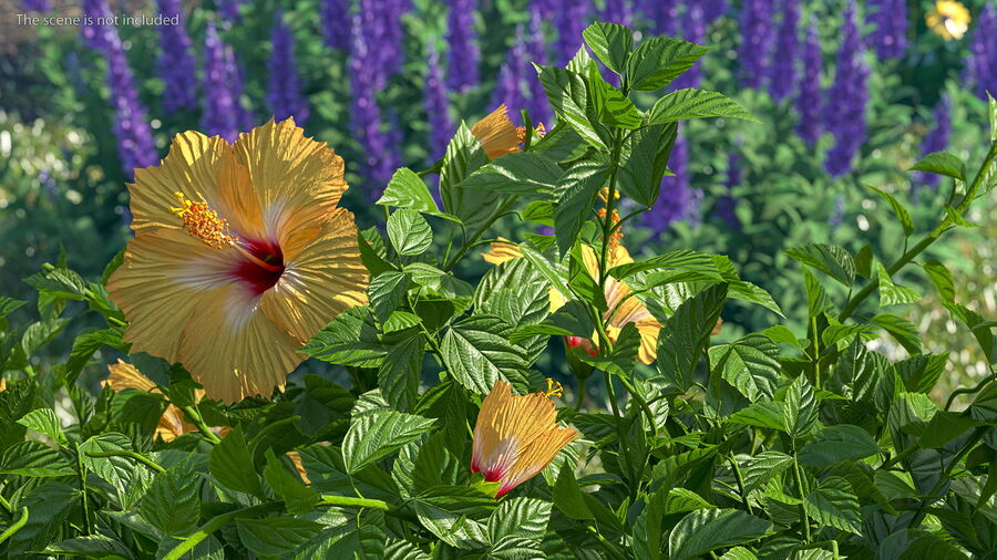 Blooming Hibiscus Flower Orange royalty-free 3d model - Preview no. 4