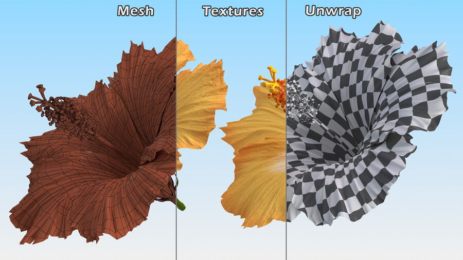 Blooming Hibiscus Flower Orange royalty-free 3d model - Preview no. 16