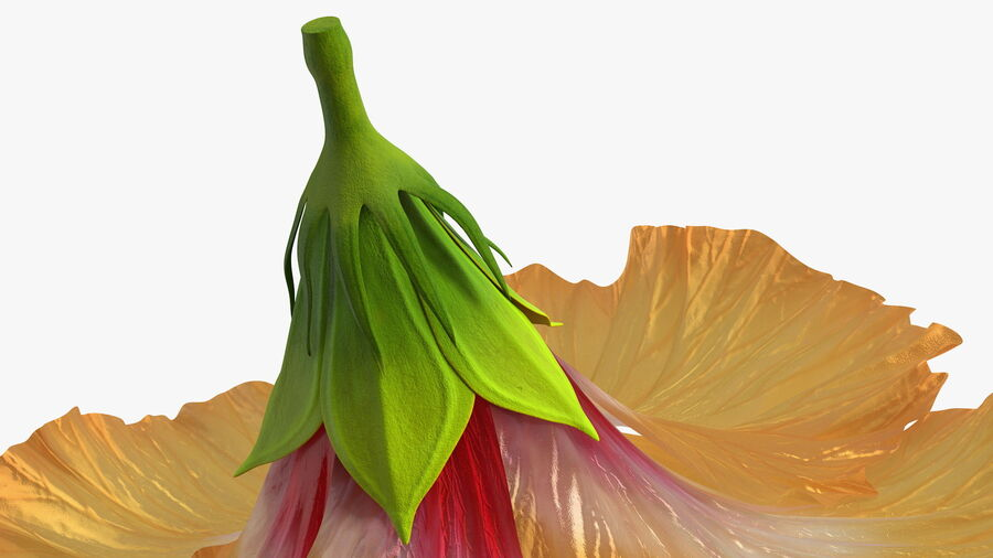 Blooming Hibiscus Flower Orange royalty-free 3d model - Preview no. 14