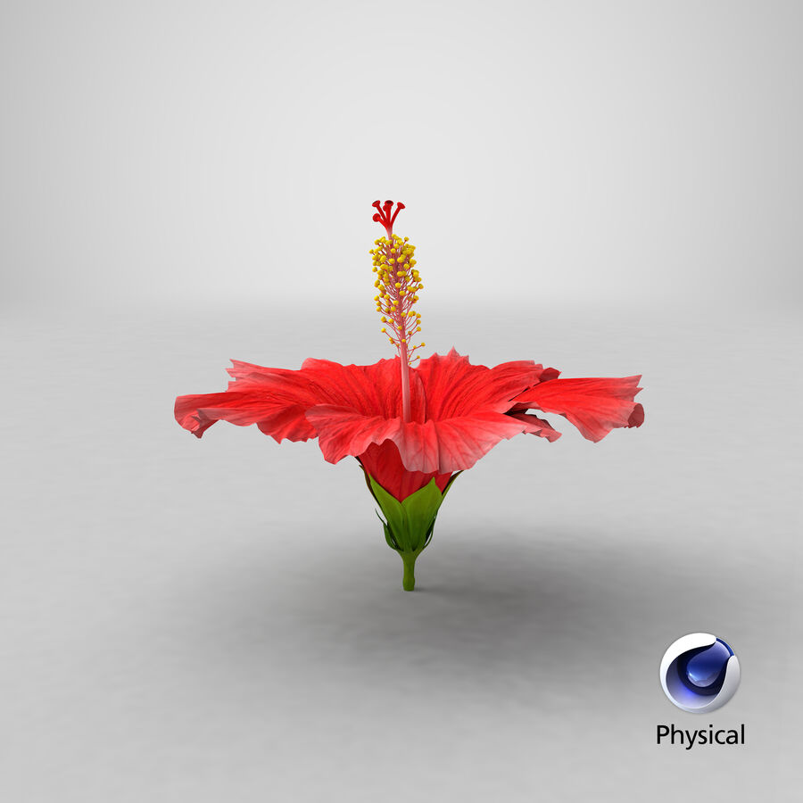 Blooming Red Hibiscus Flower royalty-free 3d model - Preview no. 1