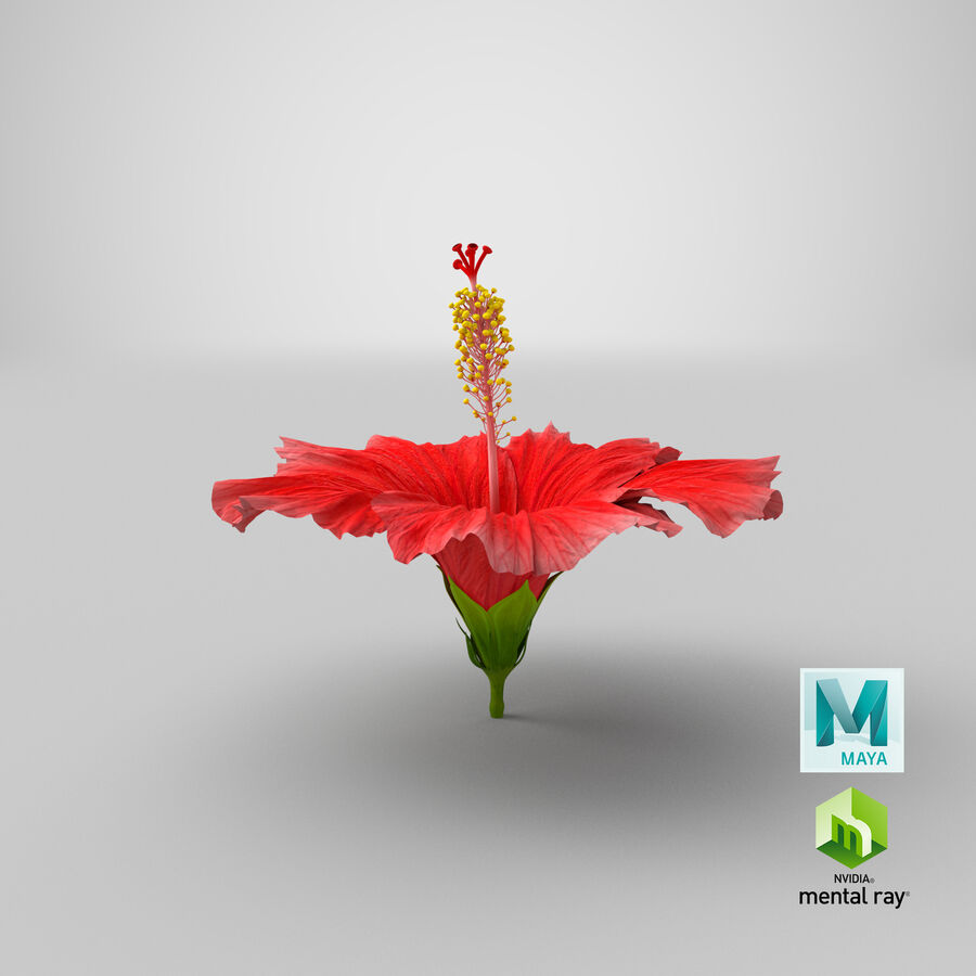 Blooming Red Hibiscus Flower royalty-free 3d model - Preview no. 9