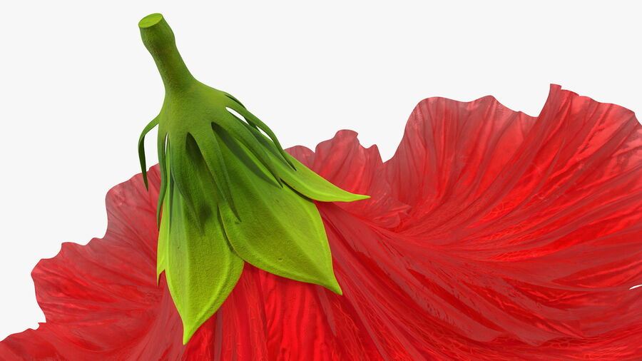 Blooming Red Hibiscus Flower royalty-free 3d model - Preview no. 14