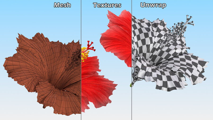 Blooming Red Hibiscus Flower royalty-free 3d model - Preview no. 16