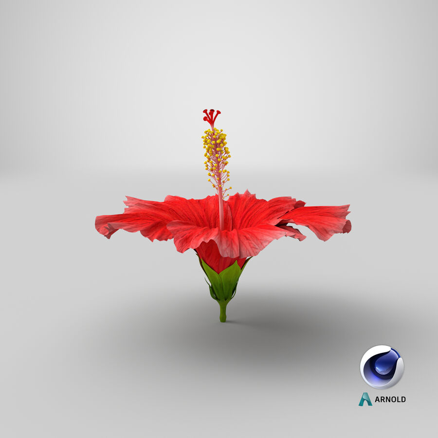 Blooming Red Hibiscus Flower royalty-free 3d model - Preview no. 2