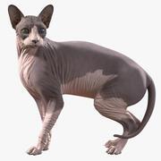 Кошка сфинкс с гетерохромией, приспособленная для Modo 3d model