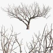 Fig Tree Bark 3d model