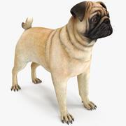 Pug Dog Neutral Pose 3d model