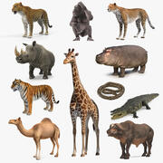 African Animals Collection 8 3d model