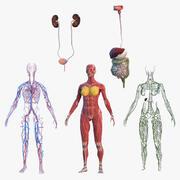 女性の体の解剖学コレクション 3d model