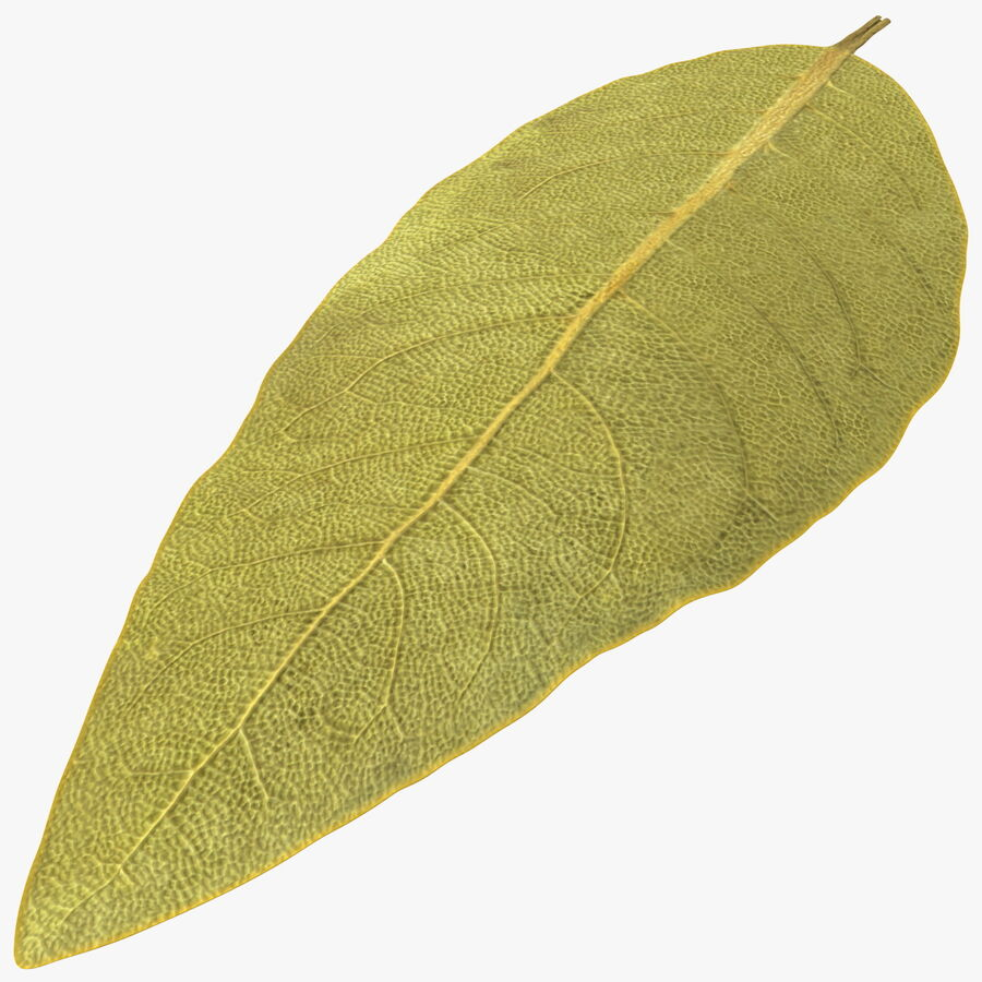 Dried Bay Laurel Leaf royalty-free 3d model - Preview no. 1