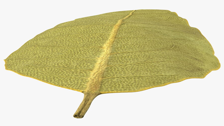 Dried Bay Laurel Leaf royalty-free 3d model - Preview no. 8