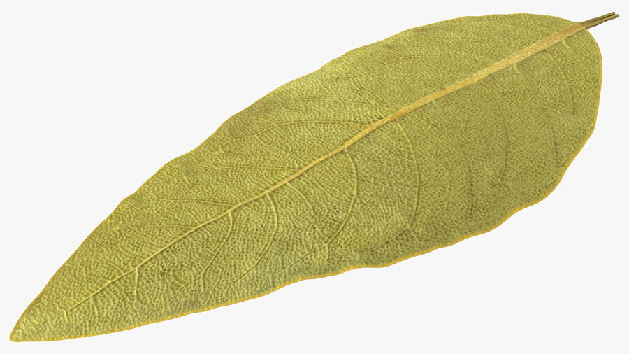 Dried Bay Laurel Leaf royalty-free 3d model - Preview no. 2