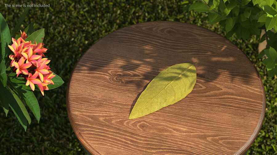 Dried Bay Laurel Leaf royalty-free 3d model - Preview no. 3