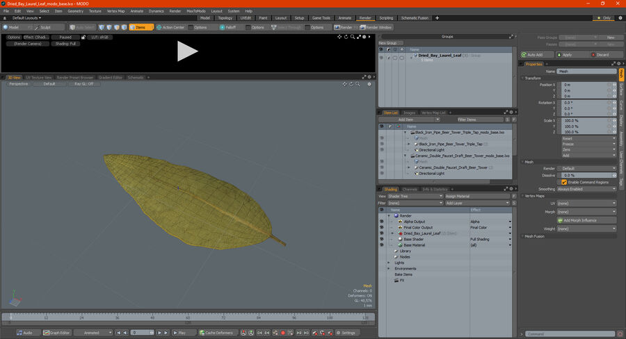 Dried Bay Laurel Leaf royalty-free 3d model - Preview no. 20