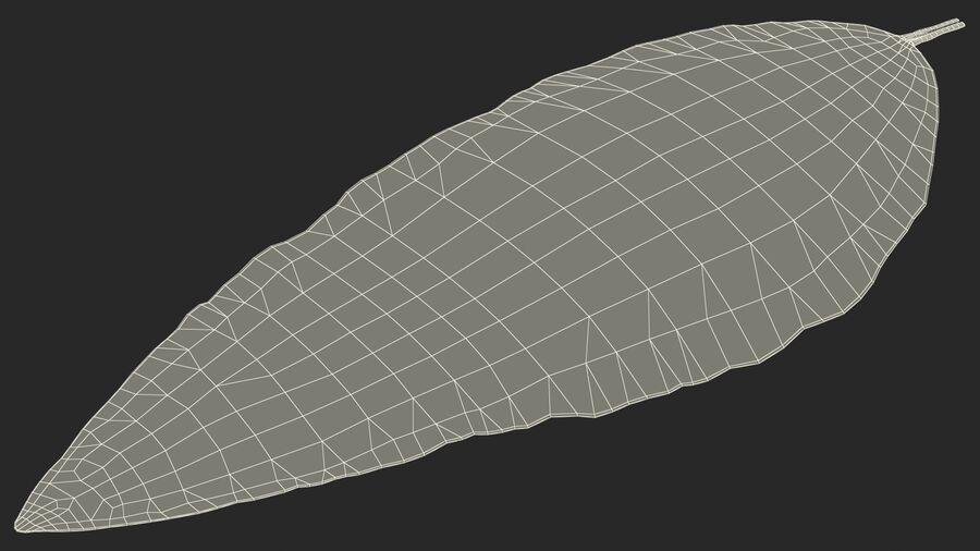 Dried Bay Laurel Leaf royalty-free 3d model - Preview no. 21