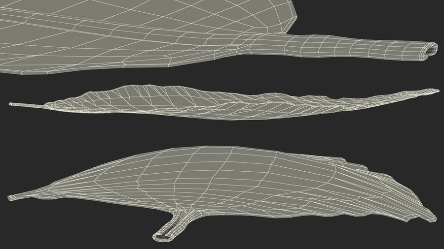Dried Bay Laurel Leaf royalty-free 3d model - Preview no. 23