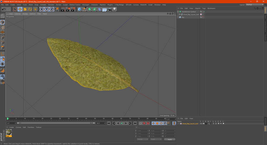 Dried Bay Laurel Leaf royalty-free 3d model - Preview no. 17
