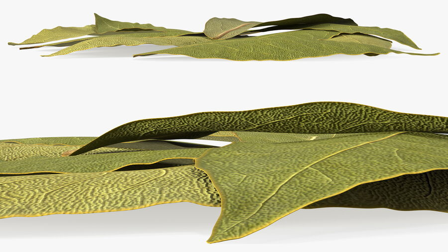 Dry Laurel Leaves royalty-free 3d model - Preview no. 15