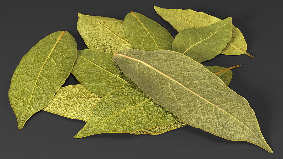 Dry Laurel Leaves royalty-free 3d model - Preview no. 7