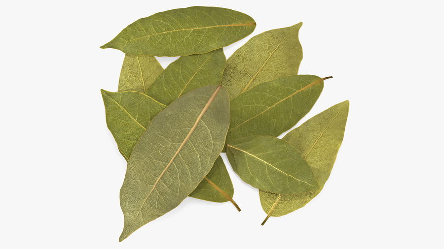 Dry Laurel Leaves royalty-free 3d model - Preview no. 2