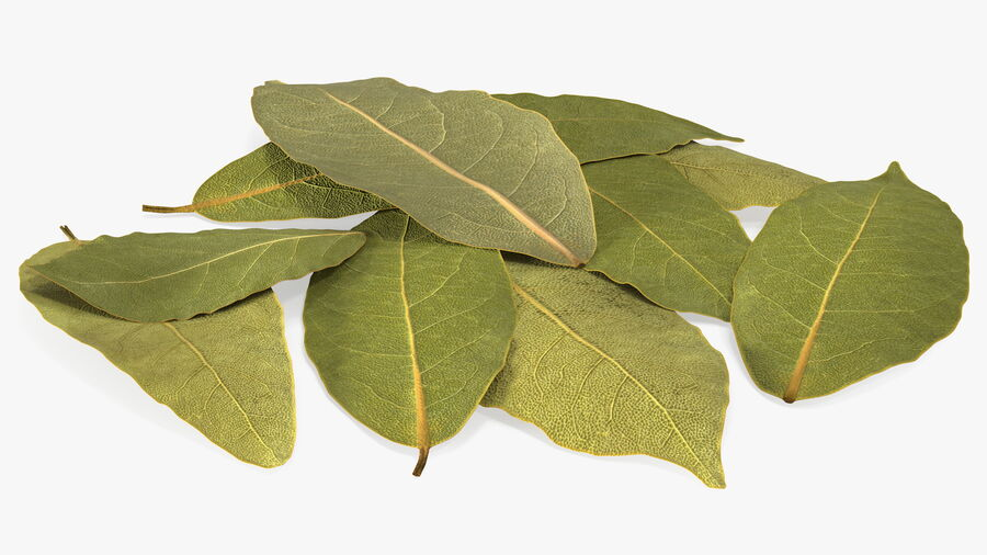 Dry Laurel Leaves royalty-free 3d model - Preview no. 9