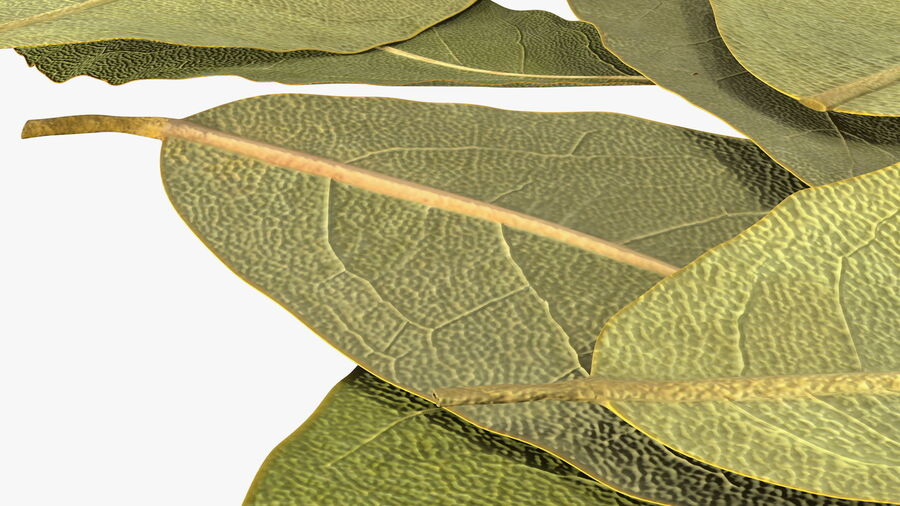 Dry Laurel Leaves royalty-free 3d model - Preview no. 14