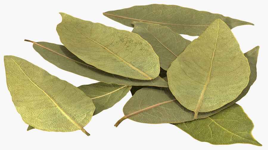 Dry Laurel Leaves royalty-free 3d model - Preview no. 10