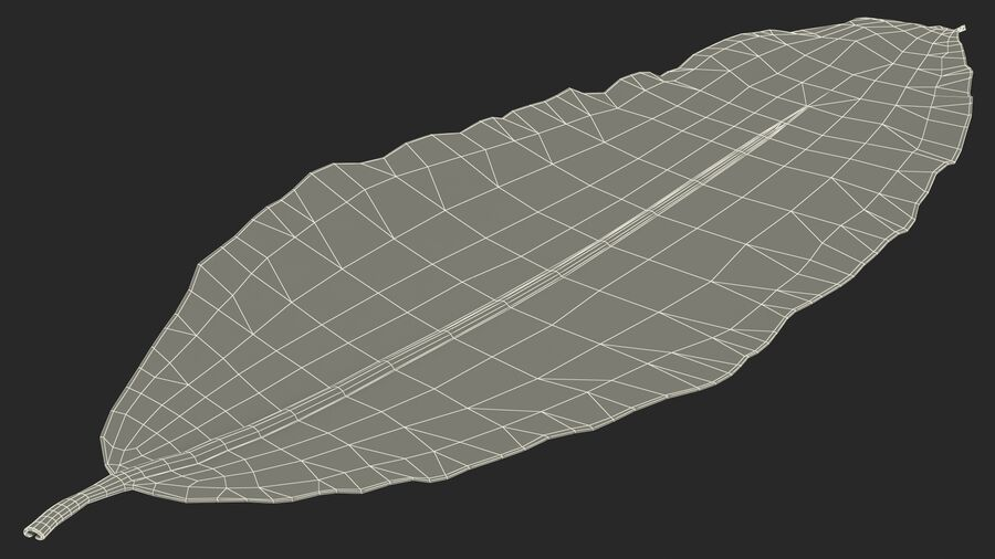 Dry Laurel Leaves royalty-free 3d model - Preview no. 30