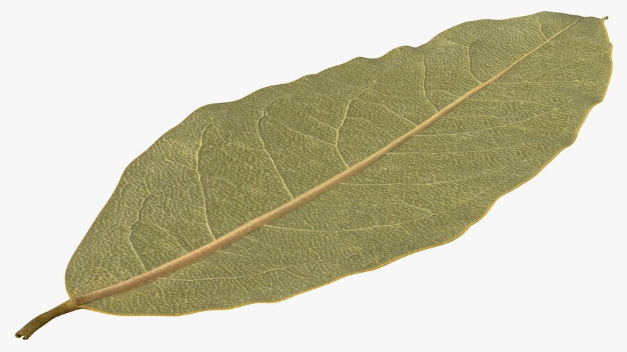 Dry Laurel Leaves royalty-free 3d model - Preview no. 12