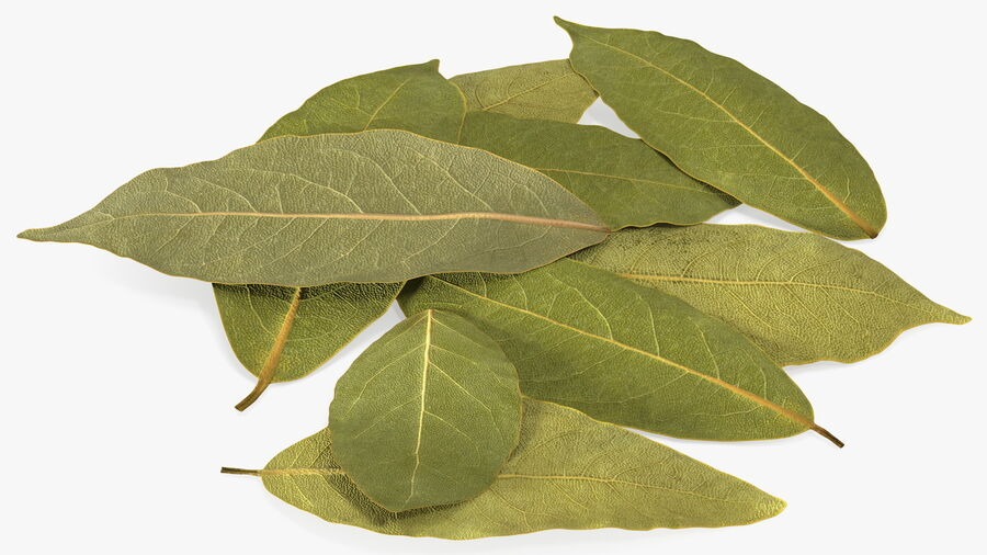 Dry Laurel Leaves royalty-free 3d model - Preview no. 8