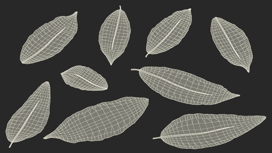 Dry Laurel Leaves royalty-free 3d model - Preview no. 26